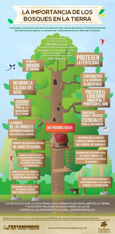 importancia de los bosques en la tierra