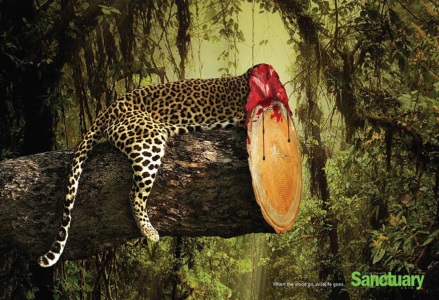 deforestacion agresiva