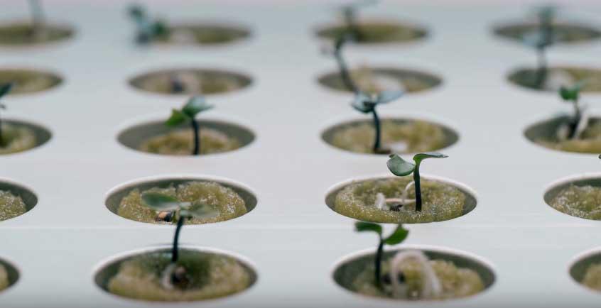 Cultiva verduras en casa con ikea kit jard n hidrop nico - Jardin hidroponico ...