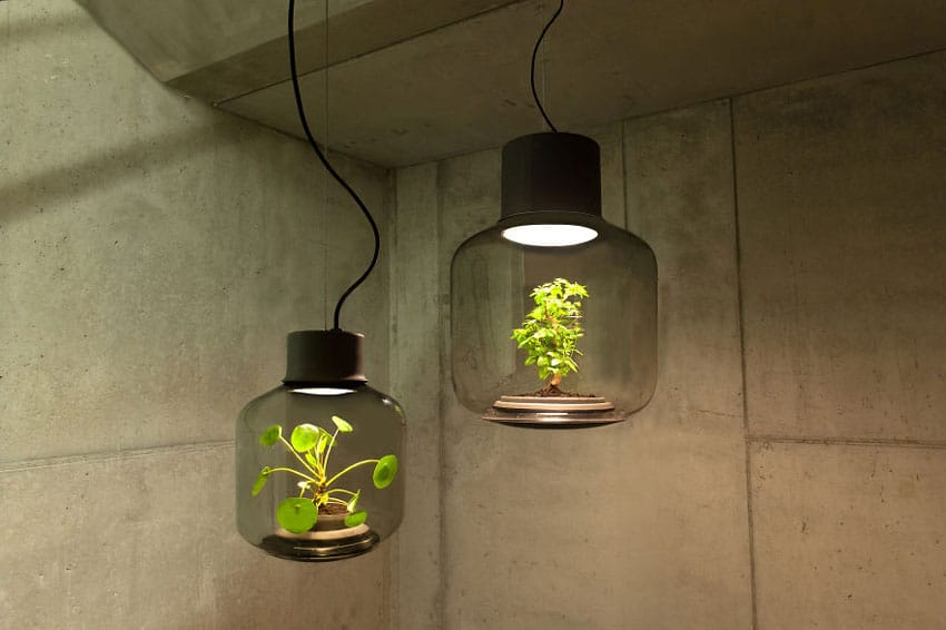 lampara planta