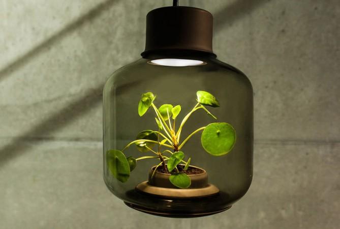plantas iluminacion