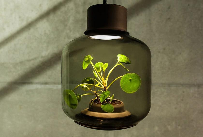 Plantas-iluminacion