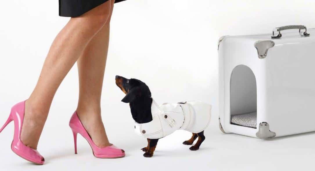 porta perros de lujo