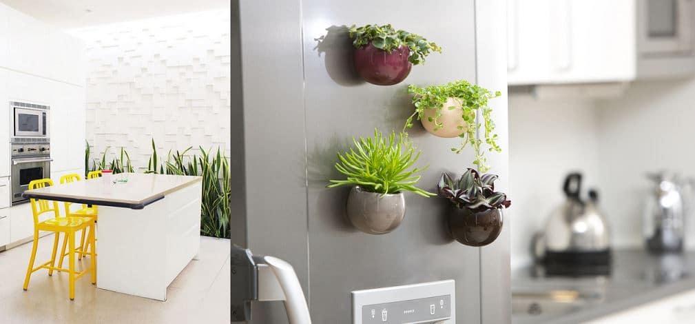 plantas en la cocina