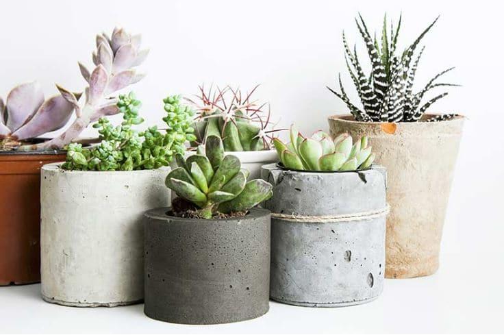 Plantas de interior en decoraci n tipos y consejos para casa for Como se llaman las plantas ornamentales
