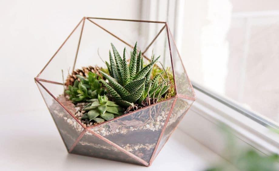 Plantas de interior en decoraci n tipos y consejos para casa for Como poner un vivero