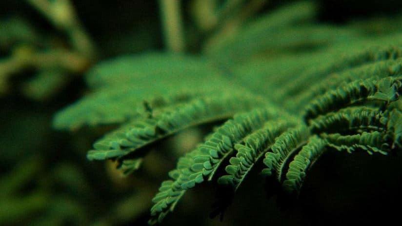 cuanta luz necesitan plantas