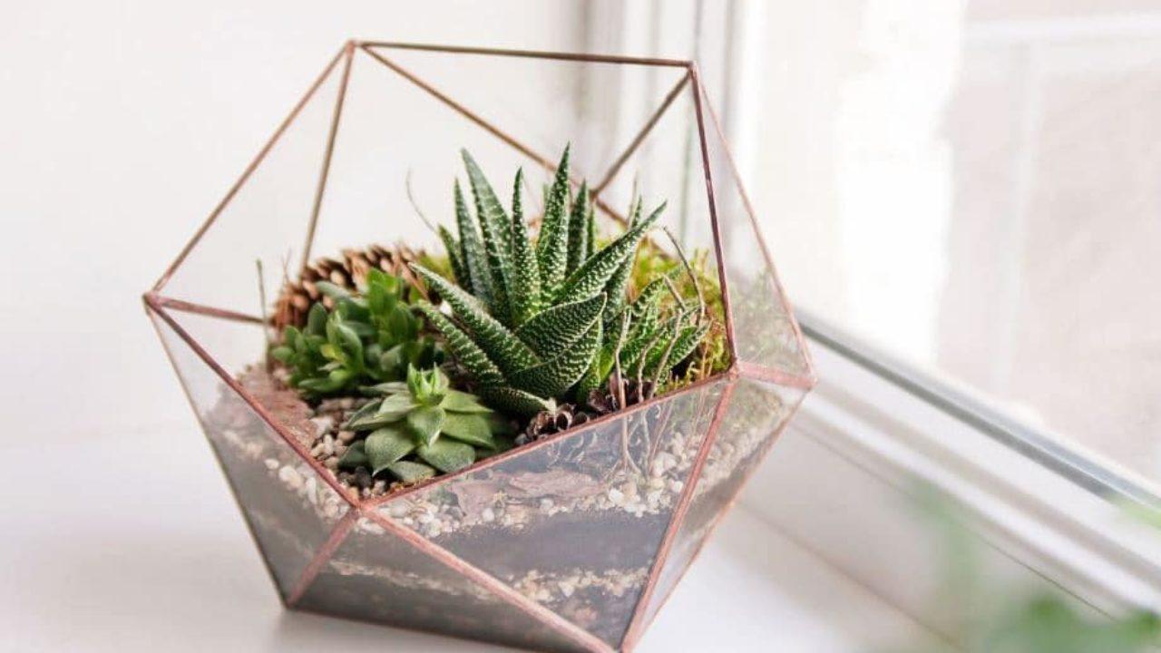 Plantas De Interior En Decoración Tipos Y Consejos Para Casa
