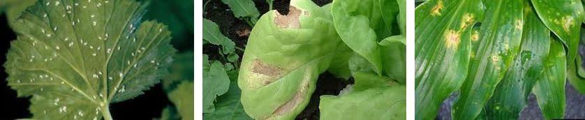 enfermedades plantas de interior