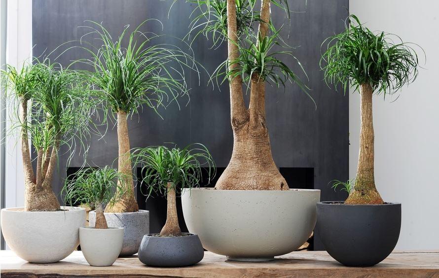 Plantas de interior en decoraci n tipos y consejos para casa for Que plantas poner en una jardinera