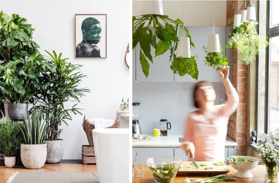 luz artificial para plantas