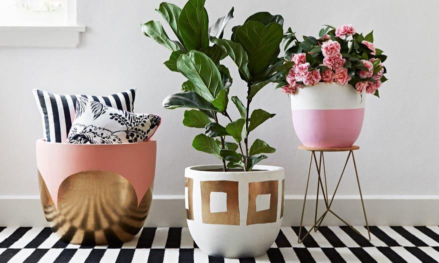 Plantas de interior en decoraci n tipos y consejos para casa - Decoracion con macetas ...