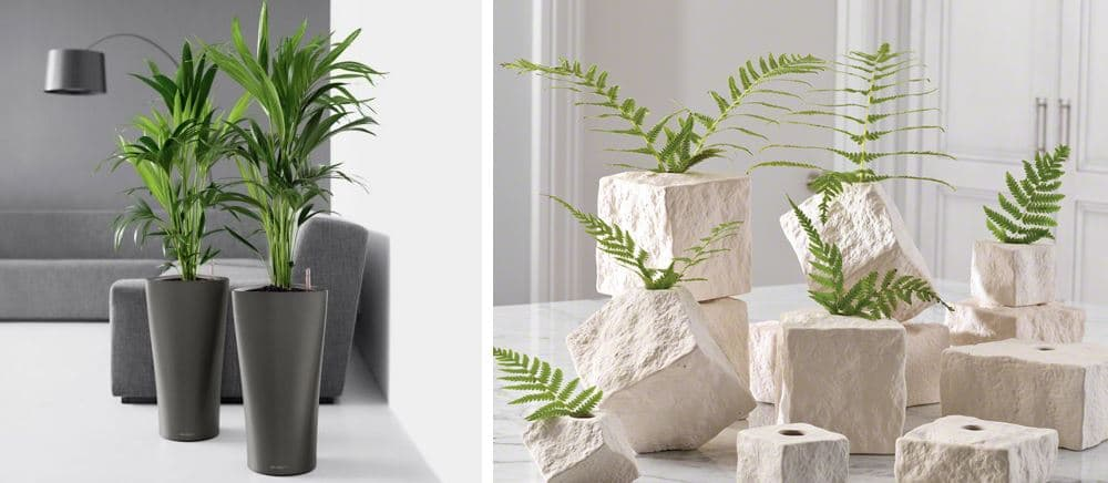 Plantas de interior en decoraci n tipos y consejos para casa for Casa de decoracion interna