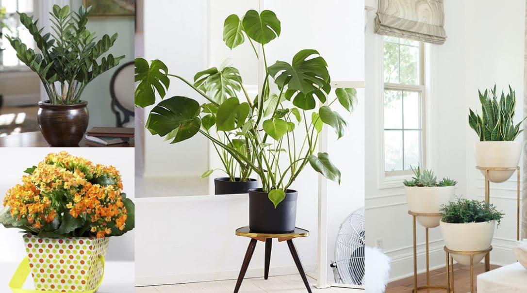 Consejos y tips de plantas para decorar tu casa o tu for Plantas decorativas de interior