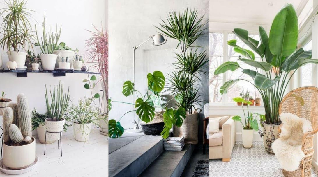 plantas de interior en decoraci n tipos y consejos para casa