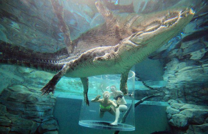bañarse entre cocodrilos