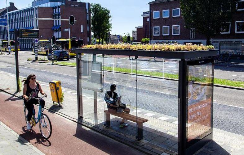 abejas en el urbanismo