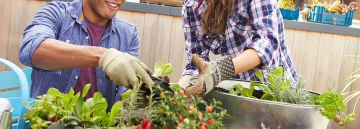 beneficios del cultivo y huerto urbano