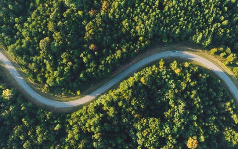 árboles para combatir cambio climático