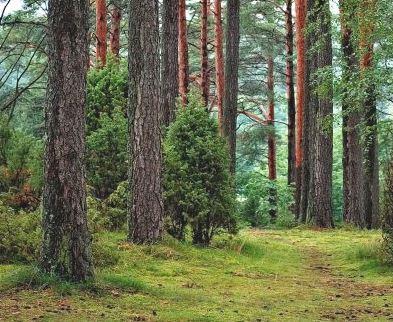 bosques contra el cambio climatico
