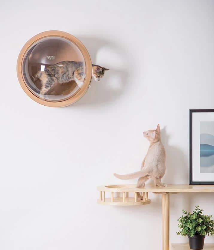 Houses and beds for cats with design - house cat wall