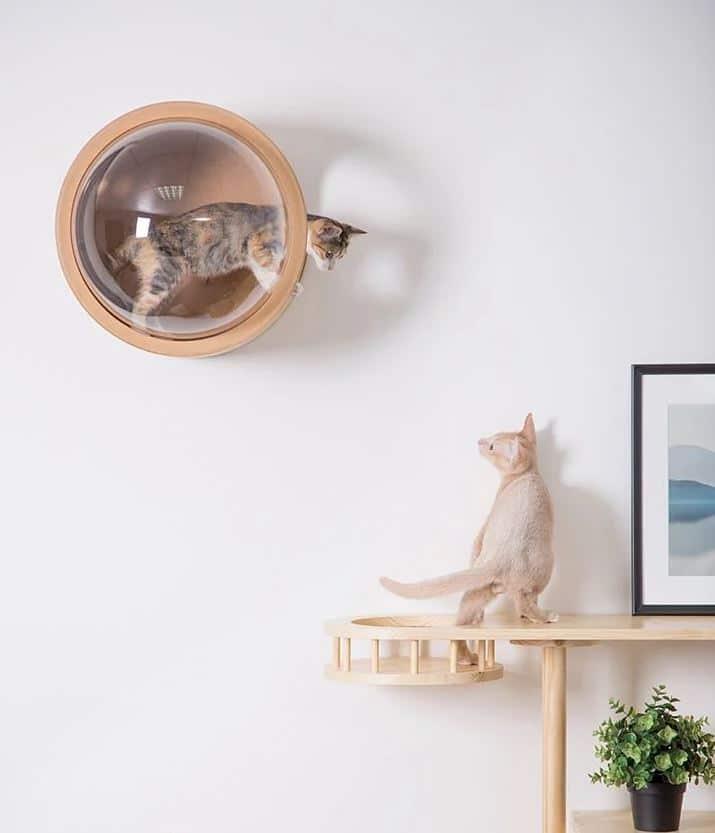 casa gato pared