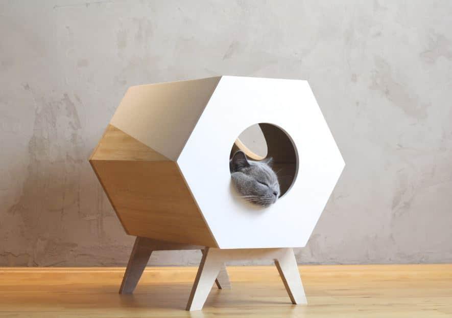 casa minimalista gatos