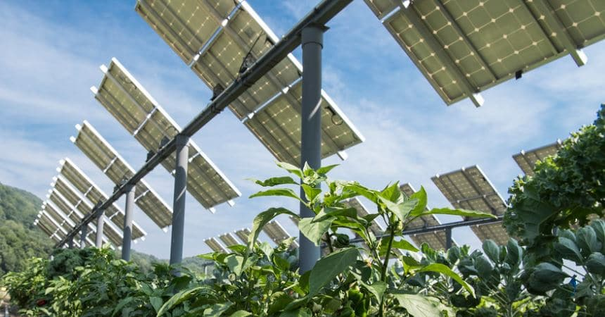 Agricultura con paneles solares