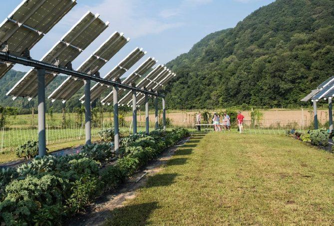 paneles solares con cultivos agrícolas