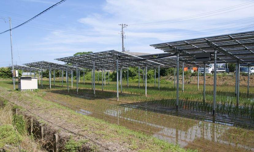 paneles solares en agricultura
