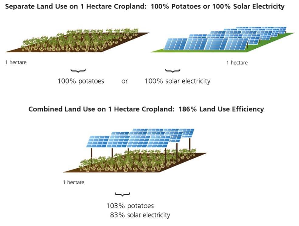 producción agrícola con paneles solares