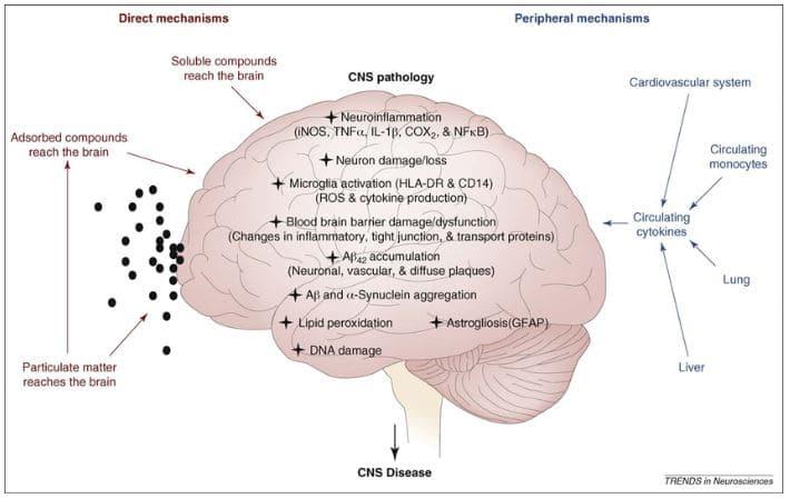 efectos contaminación cerebro