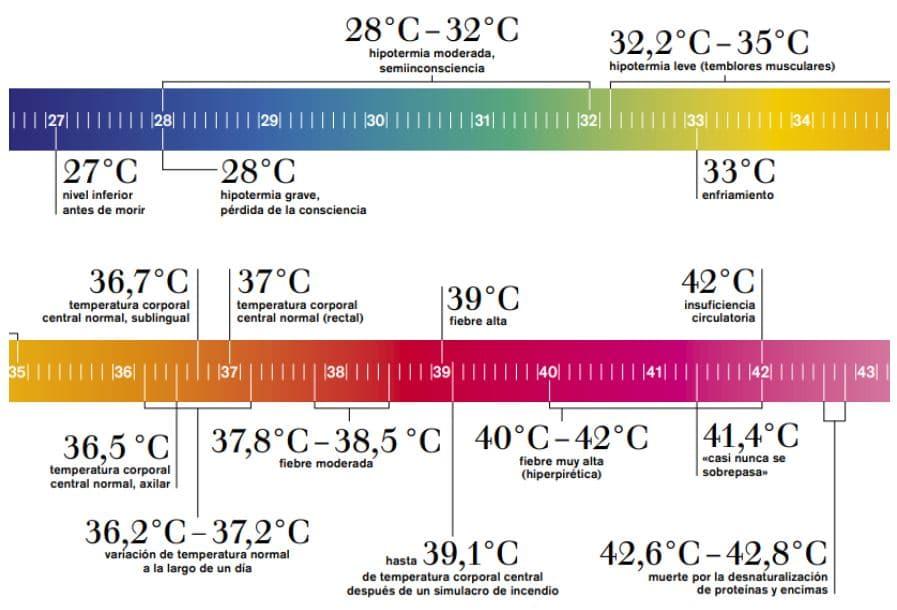 infografía fiebre y temperatura en humanos
