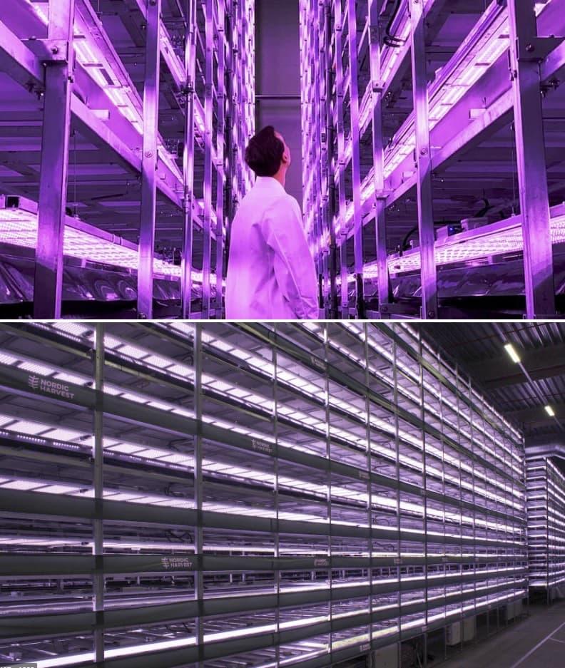agricultura vertical en edificios