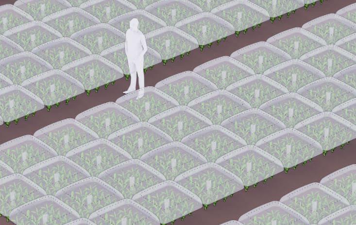 crecimiento plantas campo