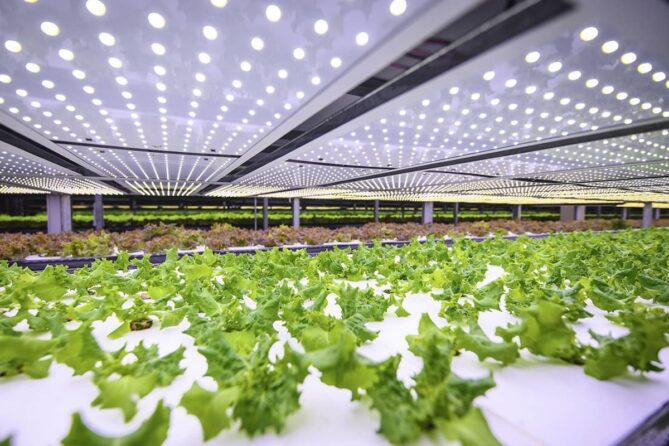 granjas verticales para producir vegetales y hortalizas