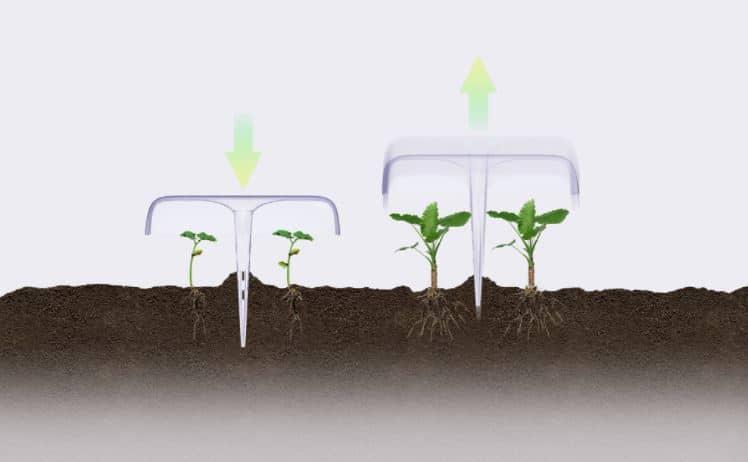 protección de las plantas