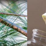 cómo hacer filtro agua doméstico
