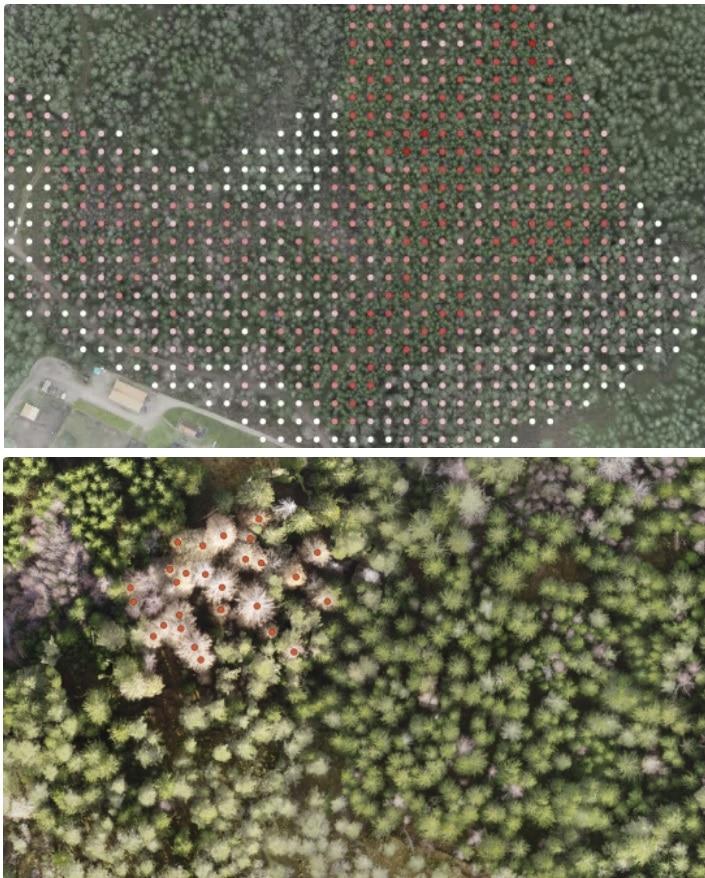 programa para medir cantidad de arboles