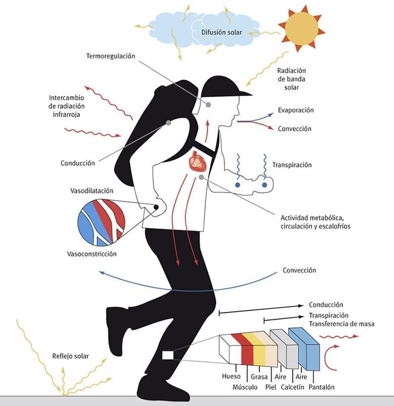 perdida calor corporal